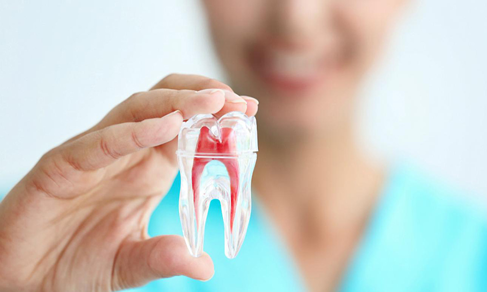 endodoncia dental médica maria carmona